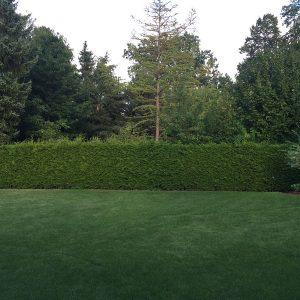 Garten 3 Finckensteinallee